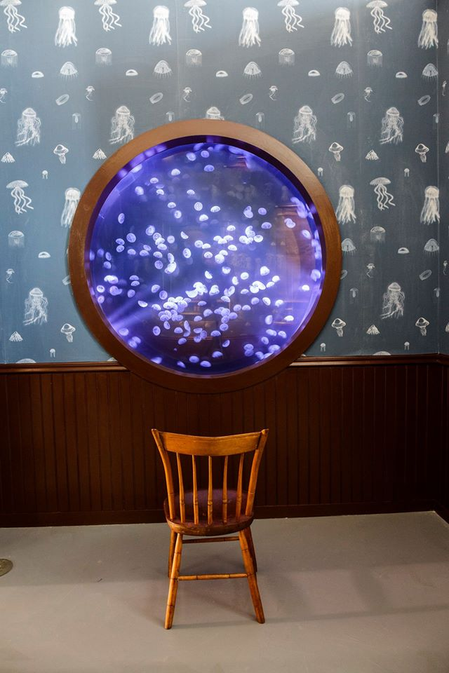 Mark Dion - Exhibition view - The Trouble with Jellyfish - Le Laboratoire, Cambridge (USA), 2015